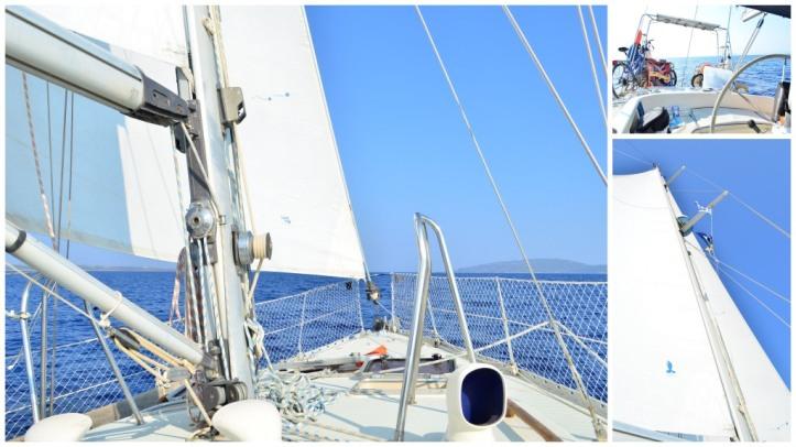 shake down sail_271