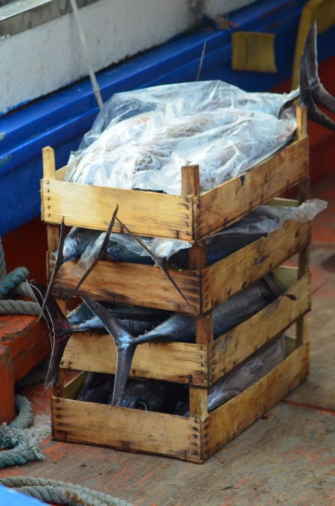 Stazzo Fishermen_112