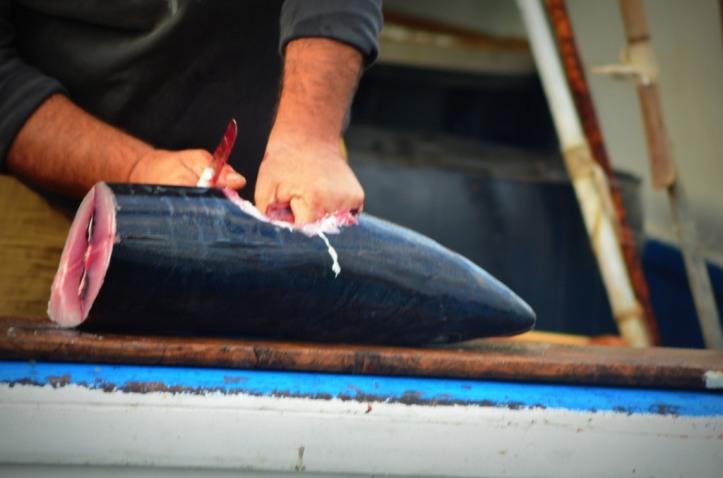 Stazzo Fishermen_98