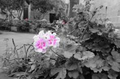Courtyard impressions