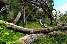 Buskett Forest_593