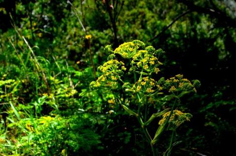 Buskett Forest_595
