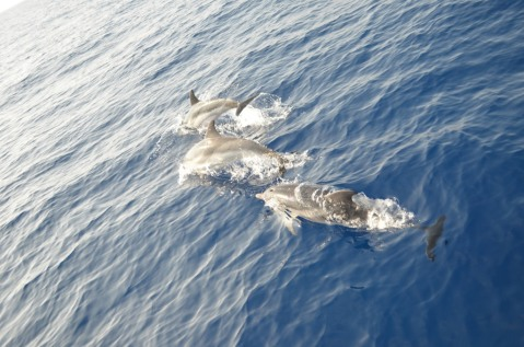 Dolphins_780