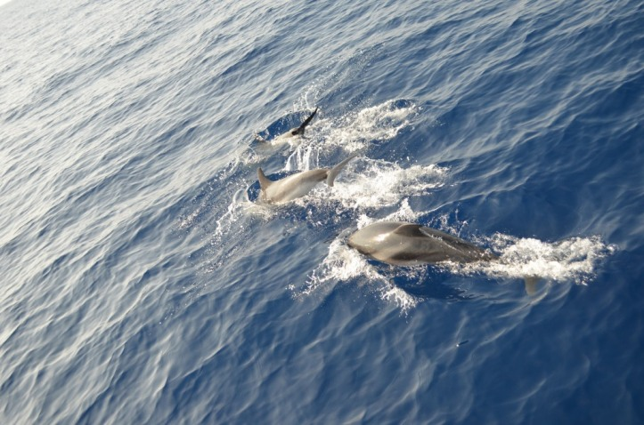 Dolphins_781