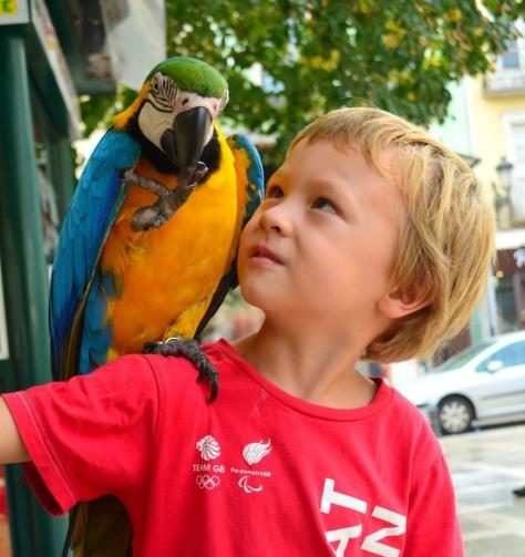 Granada Parrot_534