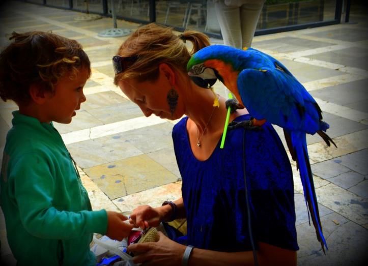 Granada Parrot_536