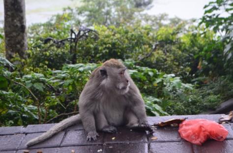 Bali April 2017_084.JPG